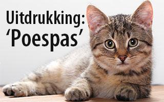 Uitdrukking: Poespas - Spelling & Zo